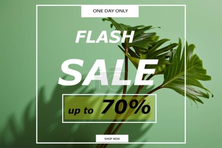 Photo for Fresh tropical green leaves on green background with flash sale illustration - Royalty Free Image