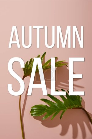 Photo for Fresh tropical green leaves on pink background  with autumn sale illustration - Royalty Free Image
