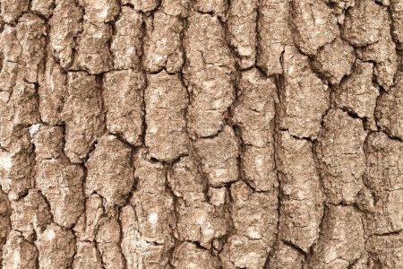 Photo for Tree bark backgroung. Horizontal. - Royalty Free Image