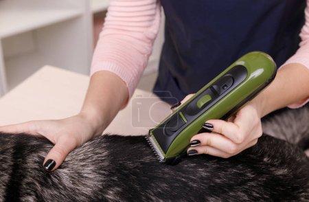Photo pour Vétérinaires rasage chien et préparation à l'intervention - image libre de droit