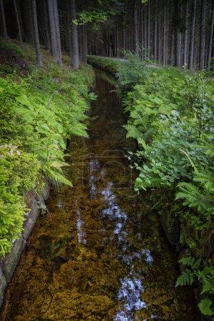 Schwarzenberg channel in sumava, Czech Republic, nature park