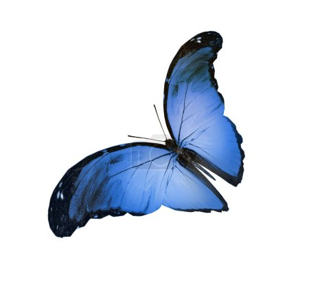 Photo pour Papillon couleur, isolé sur fond blanc - image libre de droit