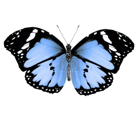 Photo for Color butterfly , isolated on white background - Royalty Free Image