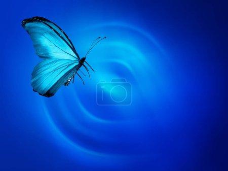 Blue butterfly on sky blue background