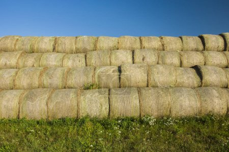 Hay bales evenly stacked on green meadows...