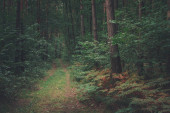 A path into a dark deciduous forest