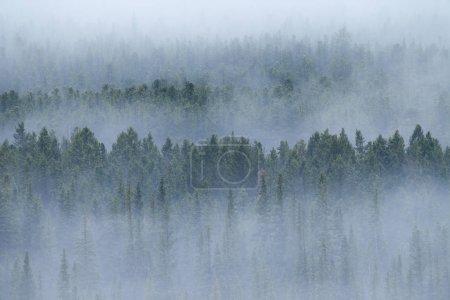 Photo pour Une matinée brumeuse dans les forêts des Rocheuses de l'Alberta, Canada - image libre de droit