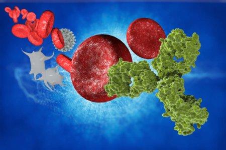 antibodies in blood cells