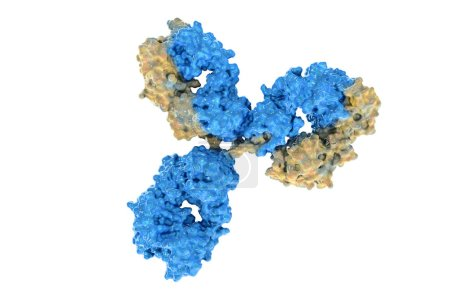 Digital image of a real cell antibodies used in the fight against the virus.