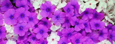 Photo pour Fleur gros plan, fond de flore naturelle - image libre de droit
