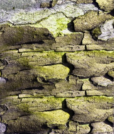 bark of an old tree background