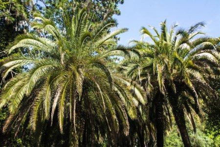 Photo pour Deux palmiers sur fond - image libre de droit