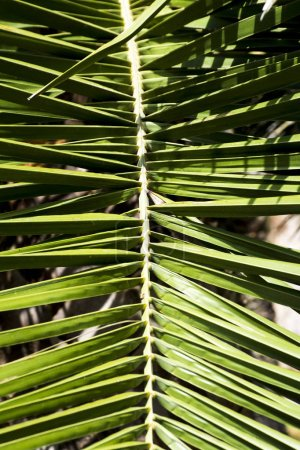 view of Palm leave background