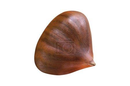 nut isolated on white, close up