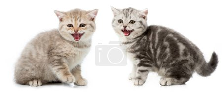 Photo pour Collage de chats gris isolés sur blanc - image libre de droit