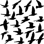 set of isolated pigeon silhouettes - vector illustration