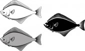 Halibut - clip art illustration