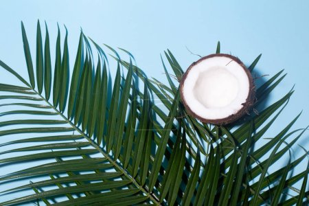 Photo for Palm leaves and coconut on a blue pastel background top view - Royalty Free Image