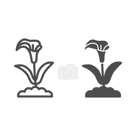 Illustration for Calla line and solid icon, summer flowers concept, arum lily sign on white background, Calla flower icon in outline style for mobile concept and web design. Vector graphics - Royalty Free Image