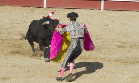 entertainment bullfight, traditional Spanish party where a matador fighting a bull
