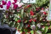 """Постер, картина, фотообои """"свежие цветы морозоустойчив на уличный рынок осенью октября в Южной Германии сельской местности вблизи города Штутгарт и Мюнхен"""""""