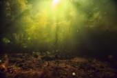 underwater view of lake bottom with algae