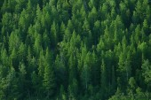 aerial view of coniferous forest in Taiga, Russia