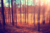 beautiful autumn forest landscape. Yellow forest, trees and leaves October landscape in the park