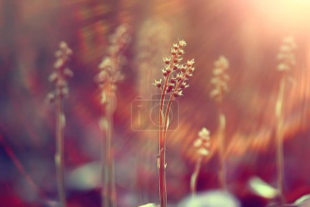 Photo pour Vintage fond peu fleurit, nature belle, tonification design printemps la nature, les plantes de soleil - image libre de droit