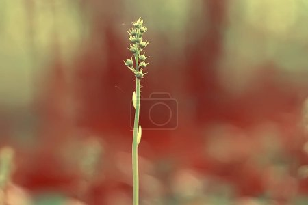 Photo for Vintage background little flowers, nature beautiful, toning design spring nature, sun plants - Royalty Free Image