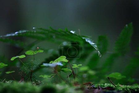 Foto de Helecho primavera fondo / Parque de naturaleza Bosque de hojas, diseño fondo de pantalla de helecho - Imagen libre de derechos