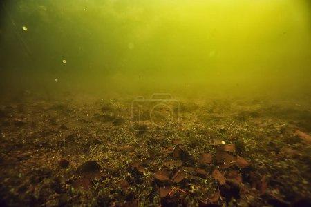 Photo pour Paysage vert sous-marin, écosystème lacustre, algues, eau verte, l'eau douce - image libre de droit