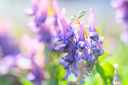 Photo for Nature  background, spring flowers, macro - Royalty Free Image