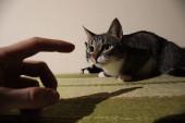 "Постер, картина, фотообои ""Two kitten lying on green sofa. indoor shooting"""