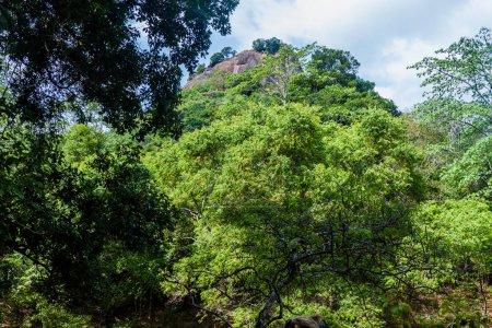View of Sigiriya Lion Rock