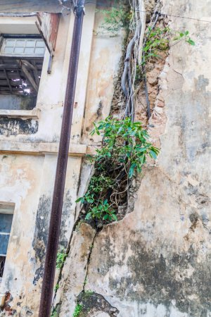 Crack with a growing plant in an old building in Galle Fort, Sri Lanka