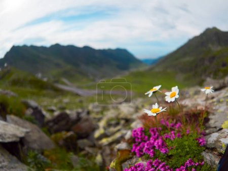 Photo pour Traversée des Carpates en Roumanie, Transfagarasan est l'une des routes de montagne plus spectaculaires dans le monde - image libre de droit