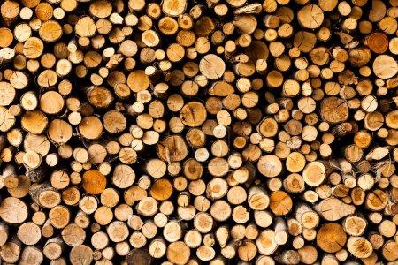 Photo pour Extrémités des grumes fond en bois. tonifiant. du bois dans la pile. - Image - image libre de droit