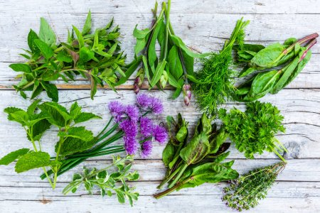 Photo for Fresh herbs on a wooden background. - Royalty Free Image