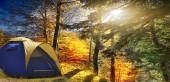 Tent in the autumn forest on the background of fir trees and the bright autumn sun. Very beautiful, picturesque place.