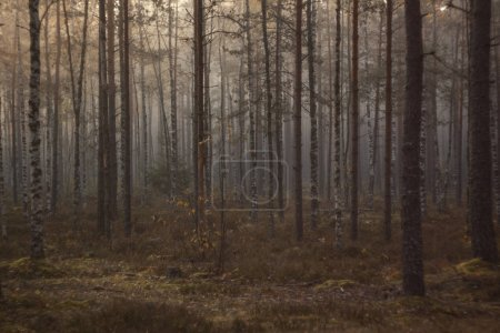 Dark mysterious foggy morning in leafy forest