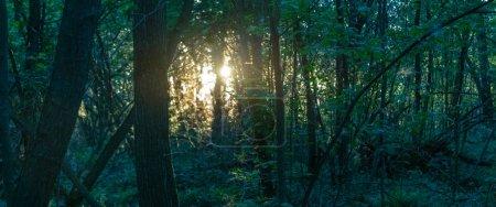 Vue panoramique du paysage forestier le soir