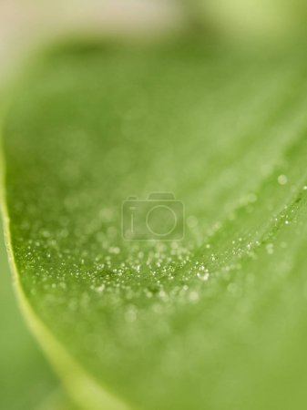 Drops over green leaf, Close-up macro image