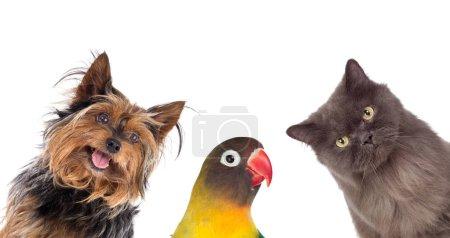 Foto de Muchas mascotas aisladas sobre un fondo blanco - Imagen libre de derechos
