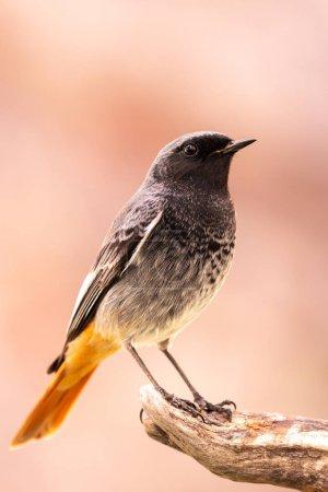 Photo pour Petit oiseau sur un tronc avec un fond jaune - image libre de droit
