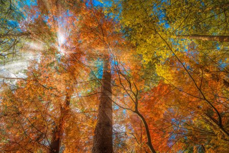 multi color trees in the autumn forest