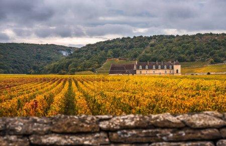 Schloss mit Weinbergen im Herbst, Burgund, Frankreich