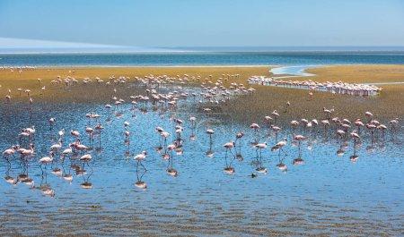 Flock of flamingos at lagoon, Walvis Bay, Namibia