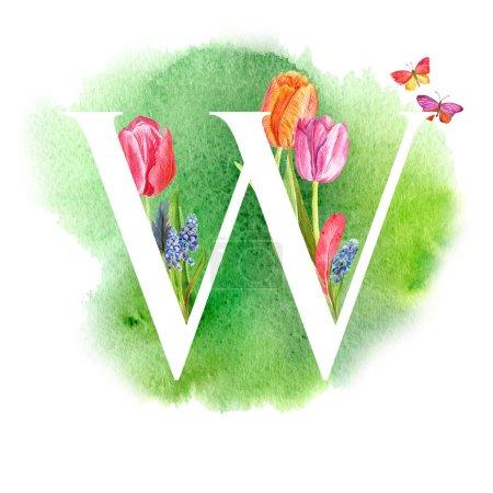 Photo pour Lettre w. Une lettre de l'alphabet avec les fleurs de printemps, tulipes de muscari, d'invitations, cartes, mariages, etc.. - image libre de droit
