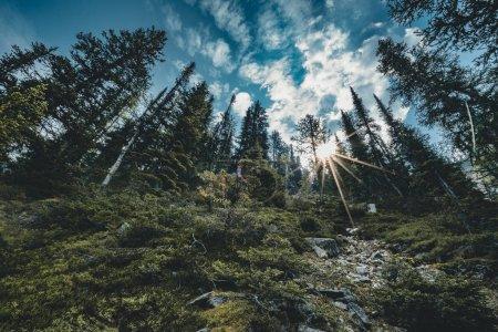 Photo pour Sunstar derrière les arbres. Photo prise dans le parc national Banff, Albeta, Canada . - image libre de droit